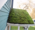 Green Roof?
